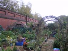 Philips Park Allotments